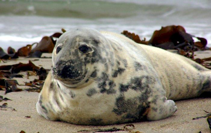 Keakraban Penyelam Dengan Seekor Anjing Laut yang Ditemuinya