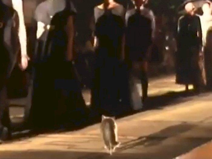 Saat Seekor Kucing Nimbrung di Catwalk Fashion Show Dior