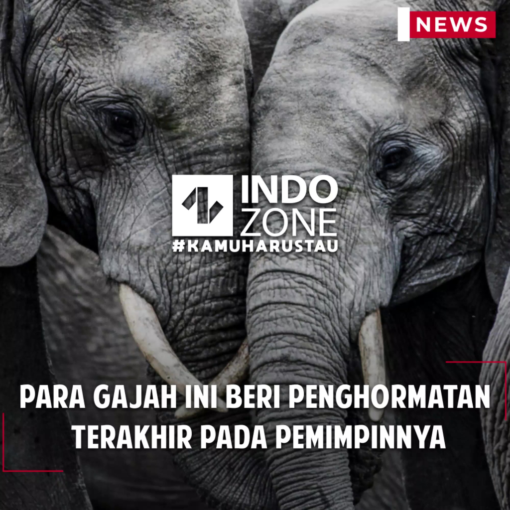 Para Gajah ini Beri Penghormatan Terakhir Pada Pemimpinnya