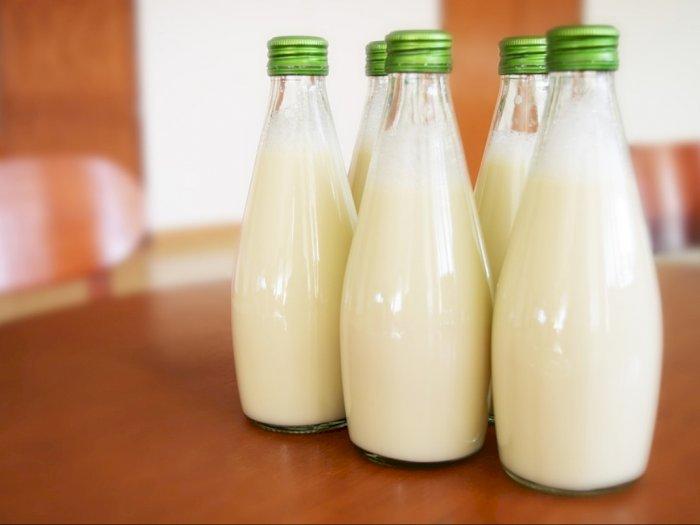 Mana Lebih Baik Antara Susu Pasteurisasi atau Susu Murni
