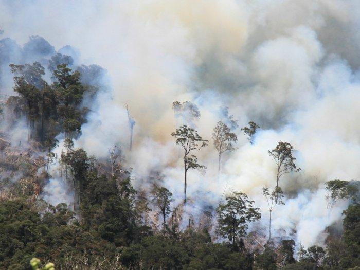 Musim Kemarau, Waspada Kebakaran Hutan