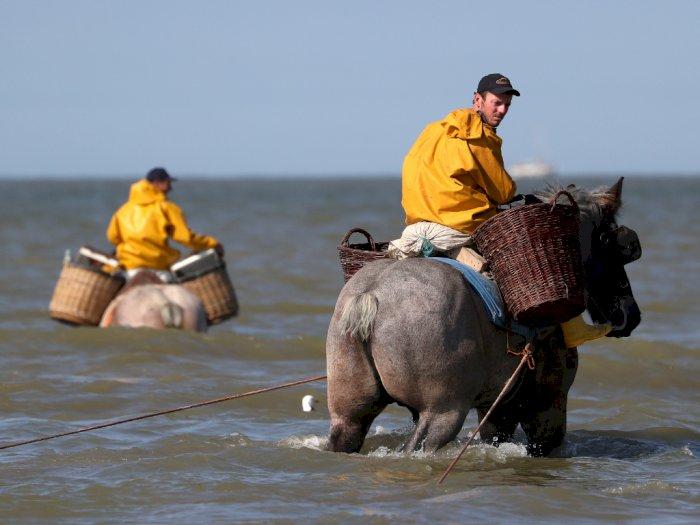 Di Belgia, Kuda Digunakan untuk 'Membajak' Laut