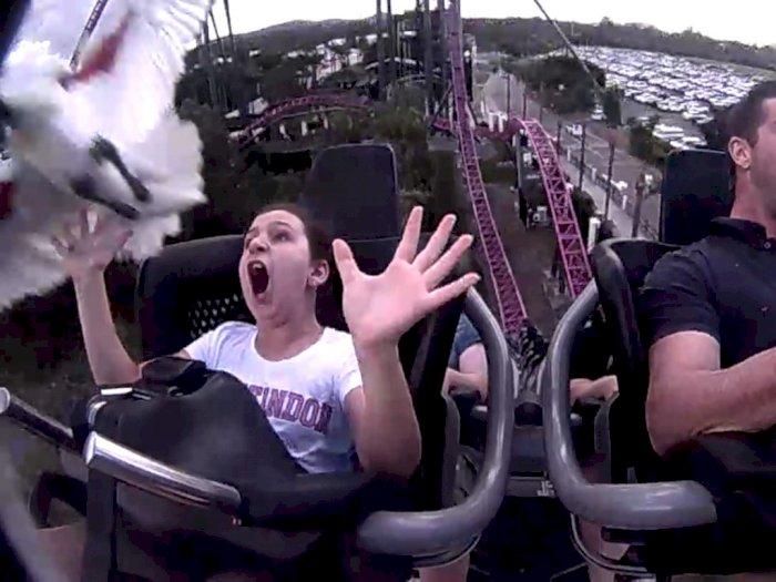 Bikin Terkikik, Video Remaja Ditabrak Burung Saat Naik Roller Coaster
