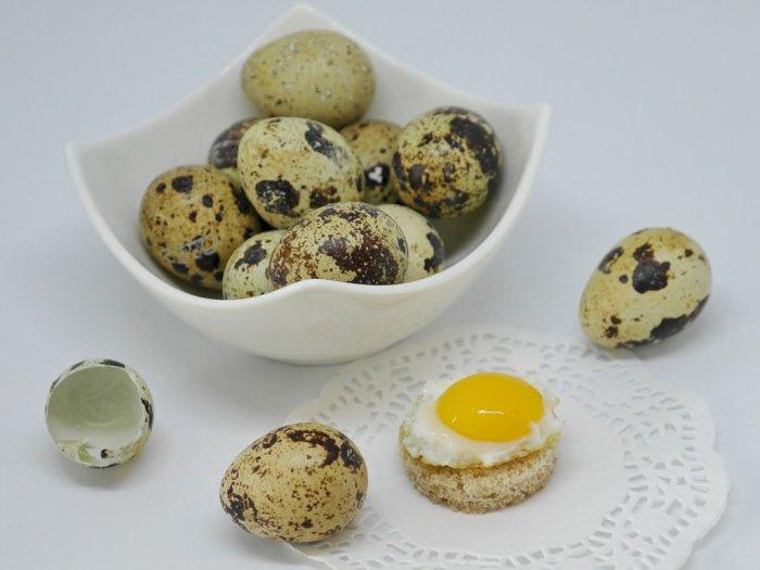 Kandungan Telur Puyuh Bisa Redakan Masalah Kesehatan Ini