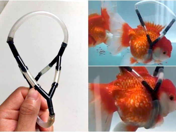 Inovasi Keren Seorang Pria Agar Ikannya Tetap Ngapung di Air