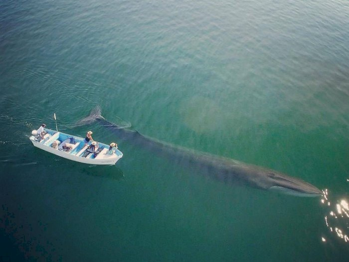 Paus Sirip, Salah Satu Makhluk Laut Terbesar yang Terancam Punah