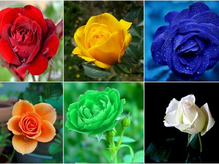 Makna yang Terkandung Di Balik 6 Warna Bunga Mawar