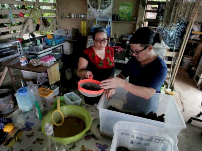 Wow... Keluarga di Kosta Rika Ini Terbiasa Mengonsumsi Serangga