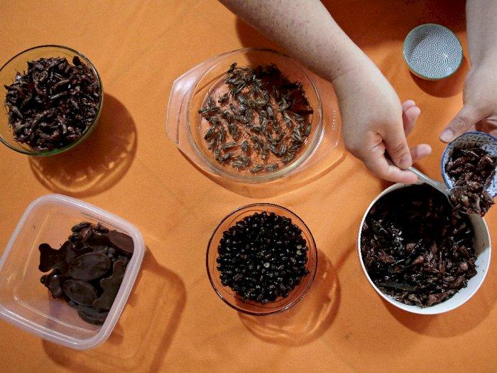 Semut, Jangkrik, Kecoa: Camilan Sehat dan Enak Bak Keripik Kentang