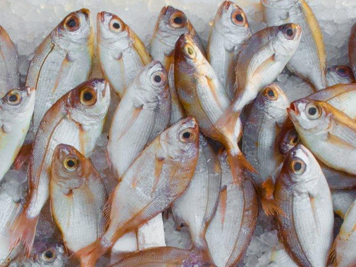 Makan Ikan Seminggu Sekali Bisa Cegah Asma Pada Anak
