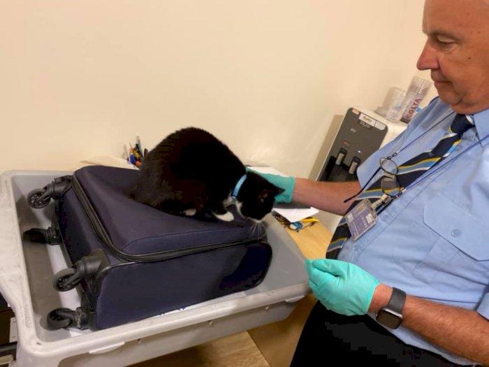 Majikan Pergi Liburan, Kucing Ini Diam-diam Menyelinap ke Koper