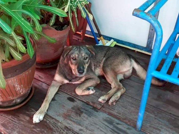 Kisah Seekor Anjing yang Setia Tunggu Majikannya