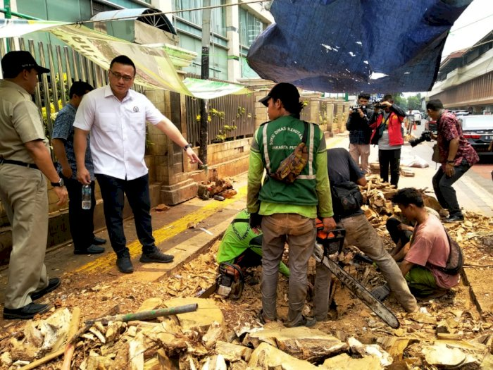 Anggota DPRD DKI: Kalau Bisa Dipindahin Kenapa Harus Ditebang