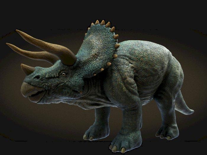 Triceratops, Dinosaurus Herbivora Bertanduk Tiga