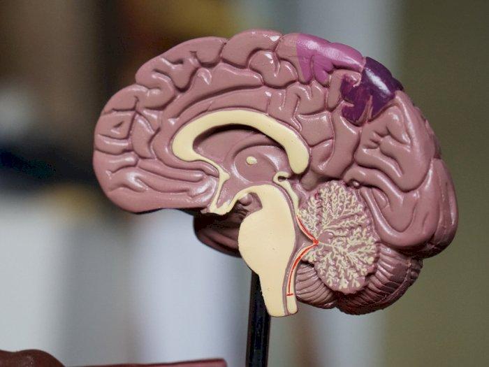 Berikut 5 Tanda Seseorang Terserang Tumor Otak yang Harus Kamu Ketahui