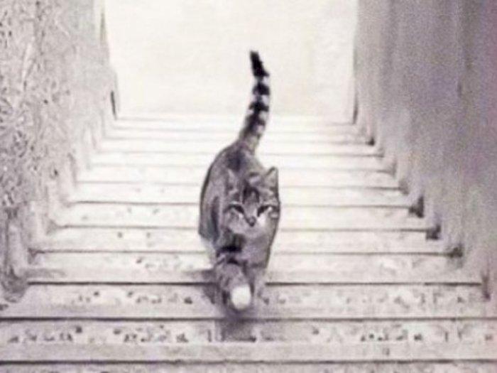Tebak Kucing Ini Sedang Turun atau Naik Tangga? dan Temukan Jawabannya