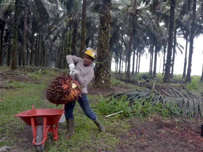 Pemerintah Diminta Ciptakan Produk Hilirisasi Kelapa Sawit