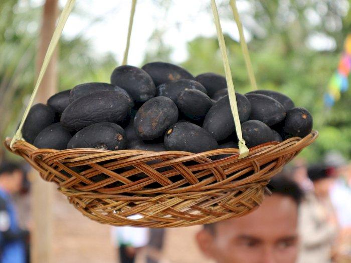 Buah Kemayau, Buah Langka dari Kalimantan