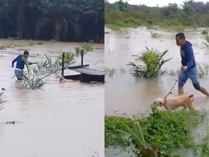 Selamatkan Anjing yang Terjebak Banjir, Pria Ini Tuai Pujian