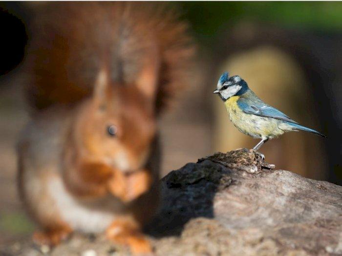 Tupai Ternyata Manfaatkan Nyanyian Burung Untuk Keamanannya