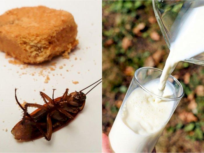 Mungkinkah Susu Kecoa Dikonsumsi Massal Suatu Hari Nanti?