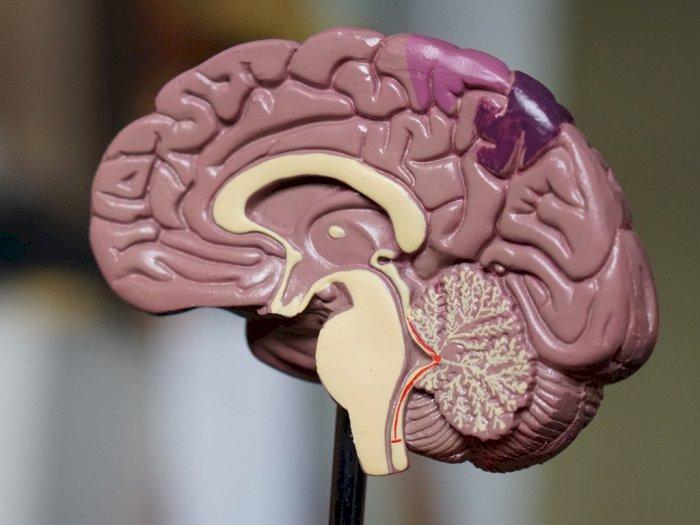 Hati-hati, Ternyata Kekurangan Oksigen Bisa Sebabkan Amnesia