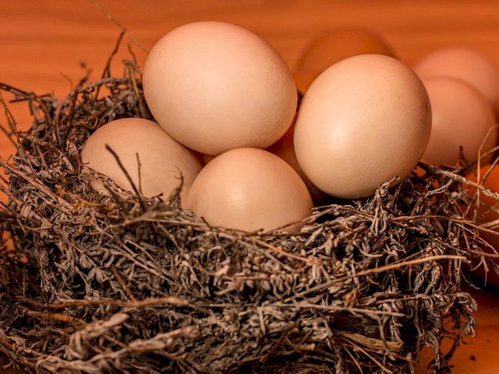 Ini Dia Tips Untuk Membedakan Telur Mentah dan Telur Rebus