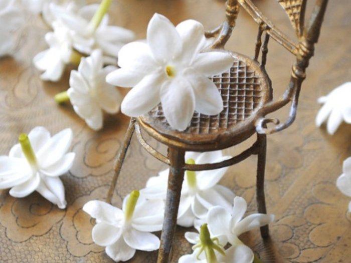 Bukan Bunga Favorit Kuntilanak, Ini Segudang Manfaat Melati