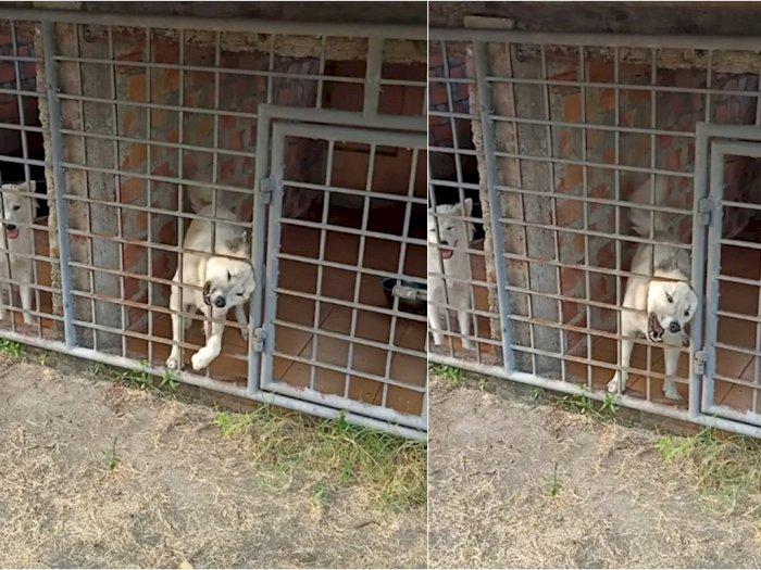 Demi Ikut ke Pasar dengan Majikannya, Anjing Ini Akting Nangis