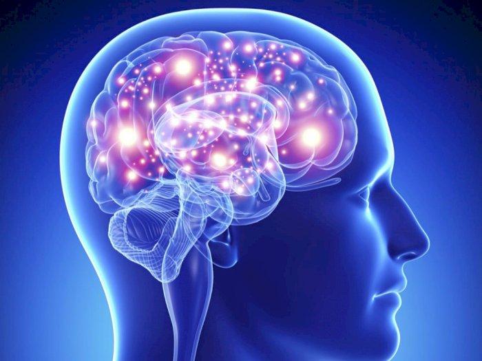 Tingkatkan Kinerja Otak dengan Konsumsi Makanan Sehat Berikut