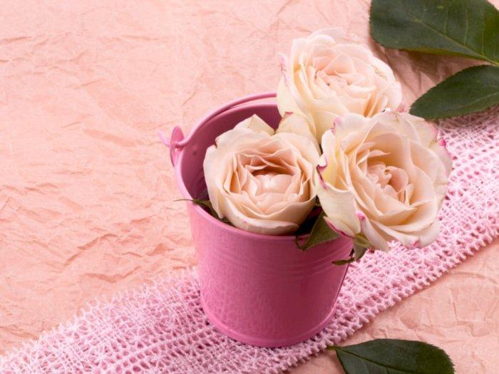 Bukan Cuma Mawar Deretan Bunga Cantik Ini Cocok Untuk Valentine Indozone Id