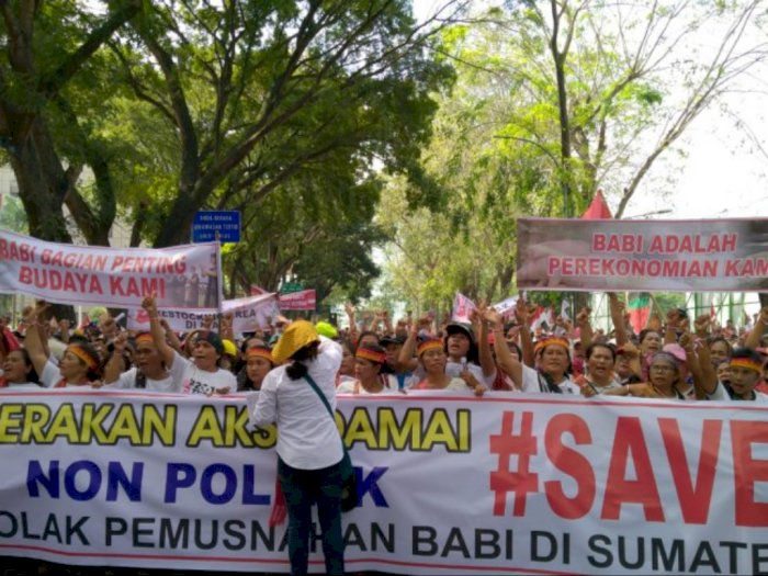 Tagar #SaveBabi Menggema di Aksi Unjuk Rasa di Depan Kantor DPRD Sumut