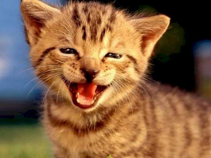 Menggemaskan! Begini Ekspresi Lucu Kucing Ketika Tersenyum dan Tertawa