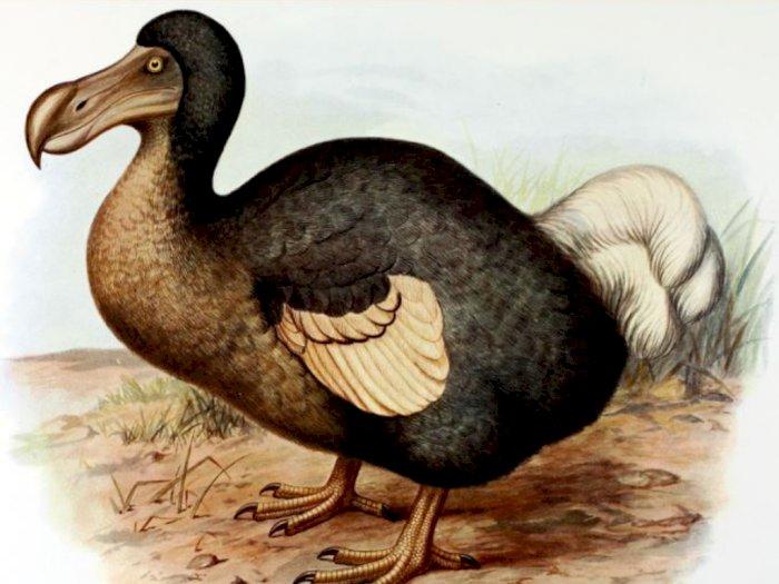 Kisah Punahnya Burung Dodo, Spesies Burung yang Tidak Dapat Terbang