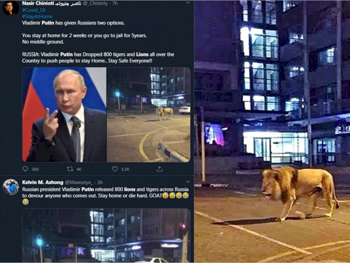 CEK FAKTA: Benarkah Putin Melepas 800 Singa untuk Paksa Warga Tetap di Rumah?