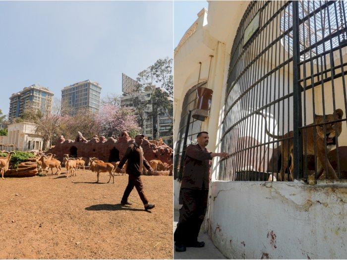 Sepi Pengunjung, Para Penjaga Kebun Binatang Ini Hanya Ditemani Hewan-hewan
