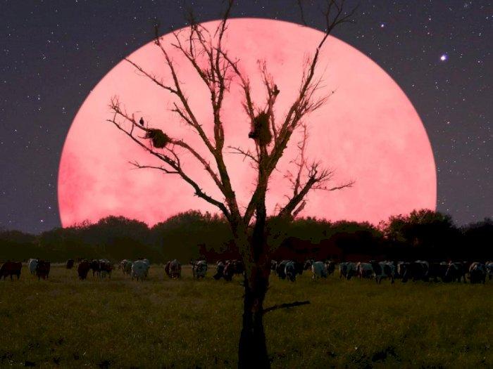 Fenomena Super Pink Moon Bakal Muncul Malam Ini