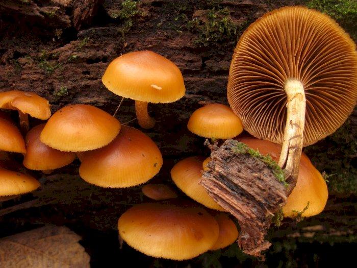 5 Jenis Jamur Beracun dan Mematikan, Jangan Sampai Dimakan!