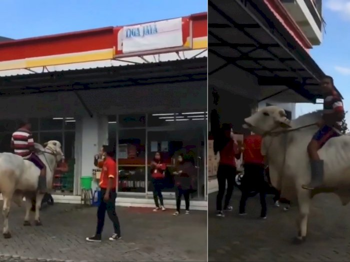 Viral Warga Tunggangi Sapi Bikin Penjaga Minimarket Menjerit