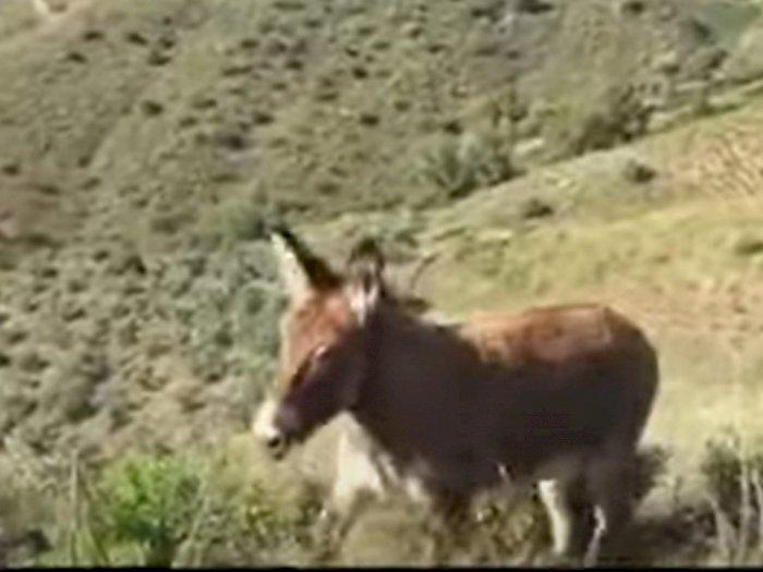 Bertemu Lagi dengan Majikannya usai Terpisah 2 Bulan, Keledai Ini Menangis