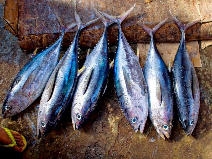 Tips Memilih Ikan Segar dan Berkualitas