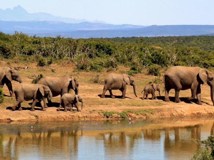 Pemandangan Safari Jadi Background Favorit di Aplikasi Zoom