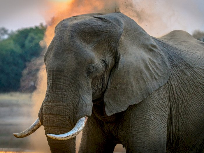 KLHK Ringkus Warga Garut yang Miliki Pipa Rokok dari Gading Gajah Sumatera