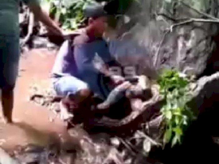 Detik-detik Remaja SMP Tewas Dililit Ular Piton saat Mendaki Gunung, Menjerit Minta Tolong