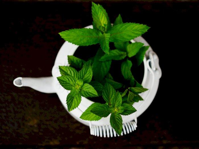 #KAMUHARUSTAU Manfaat Bubuk Peppermint bagi Kesehatan