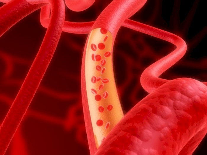 Fakta! Panjang Pembuluh Darah Manusia Dua Kali Keliling Bumi