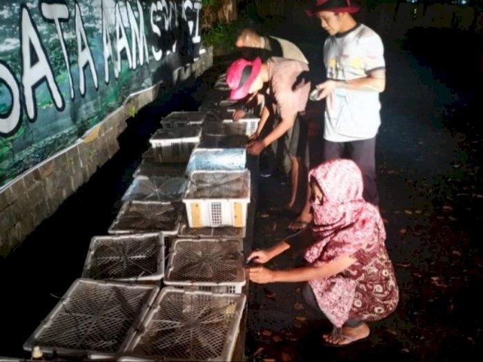 300 Ekor Burung Gelatik Dilepasliarkan BBKSDA Sumut ke Sibolangit