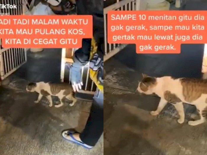 Akting Jadi Patung saat Diusir, Tingkah Kucing Ini Bikin Netizen Heran