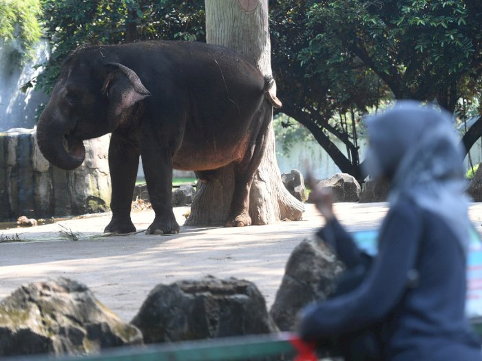 FOTO: Taman Margasatwa Ragunan Kembali Dibuka