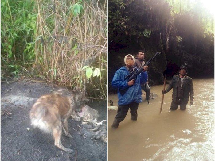 Pemburuan Mahluk Diduga Hisap Darah Ternak di Taput, Ditemukan Bangkai dan Penampakan Aneh